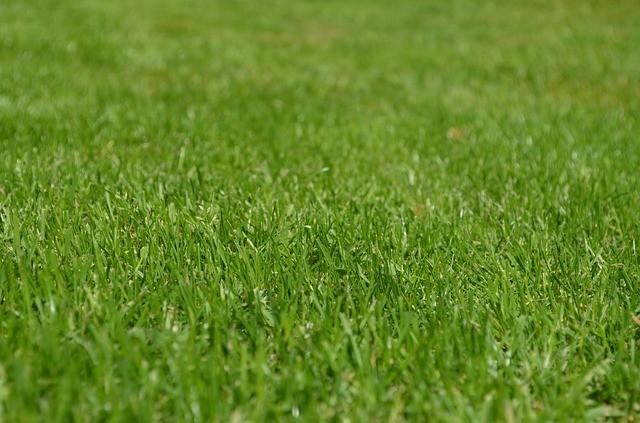 trawnik kosiarka alko