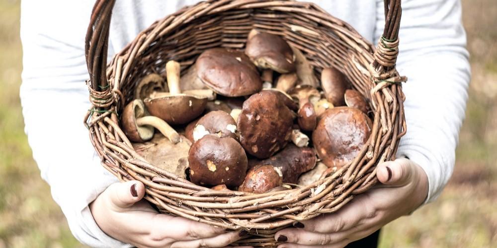 grzybnia boczniaka cena