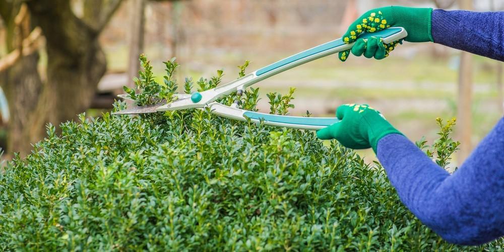 narzędzia ogrodnika